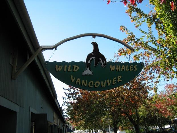 Wild whale Vancouver